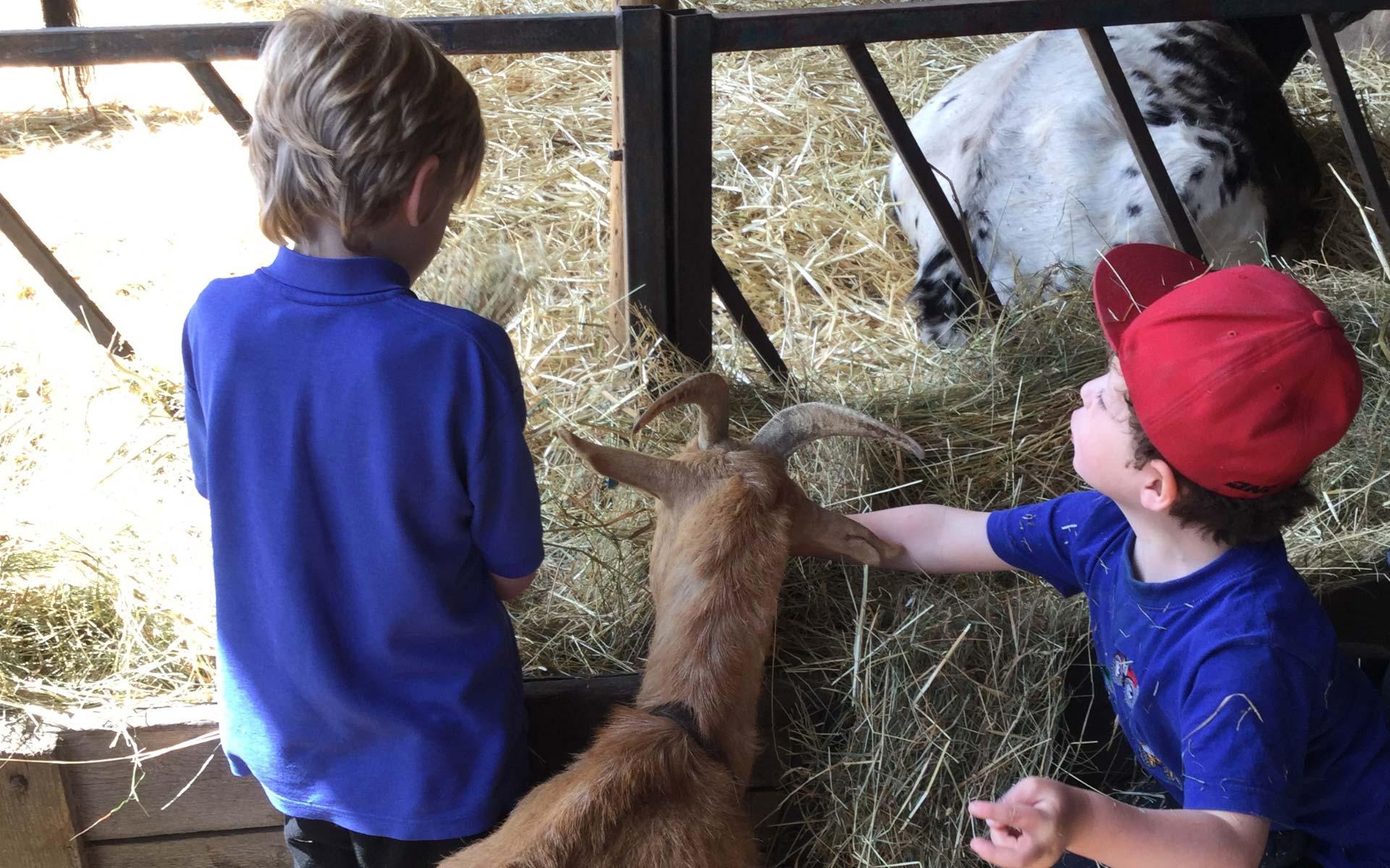 Paternoster School Farm Trip